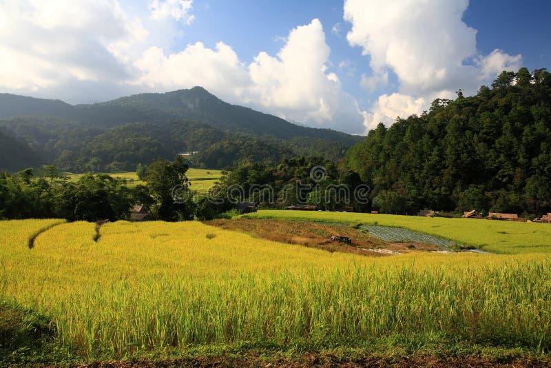 Download Terrasserat Ricefält På Skörden Arkivfoto - Bild av fertilt, organiskt: 27285714