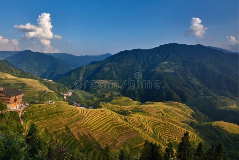 Terrasserat ris sätter in den Wengjia longjien Longsheng Hunan Kina arkivbild