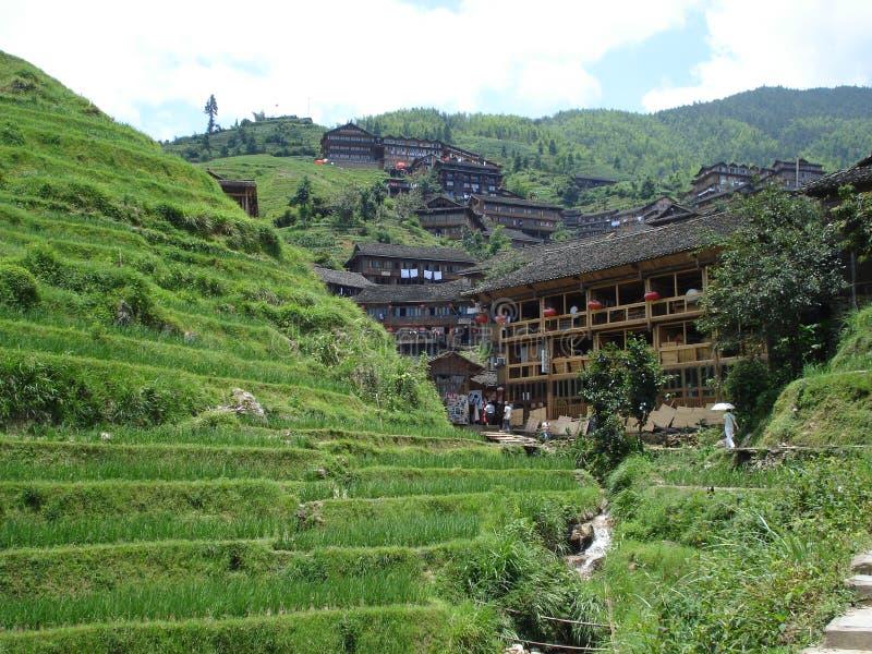 Terrasserat ris sätter in den Wengjia longjien Longsheng Hunan Kina arkivbilder