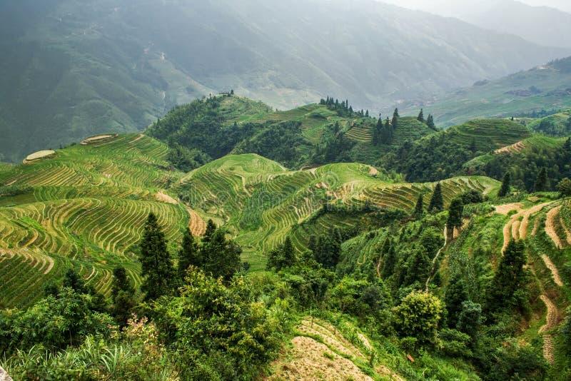 Terrasserat risfältfält i det Longsheng länet Guangxi Kina royaltyfria foton