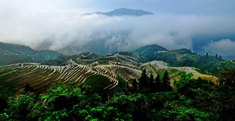 Terrasserat risfältlandskap arkivfoto
