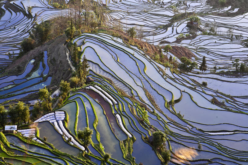 Terrasses antiques de riz image libre de droits