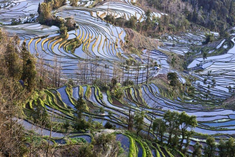 Terrasses antiques de riz images libres de droits