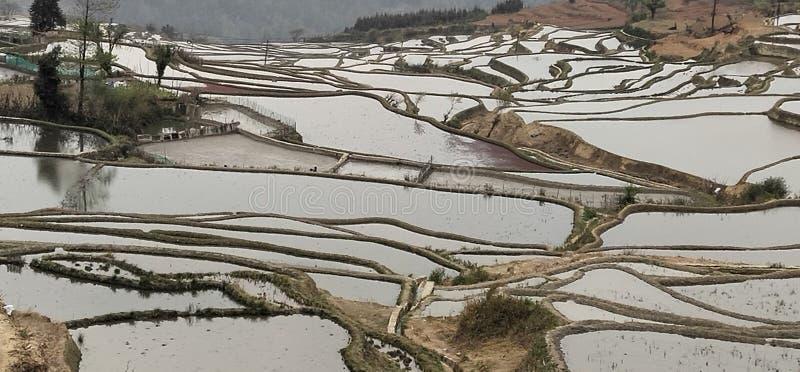 Terrasses argentées de riz dans la province de Yunnan, Chine photographie stock