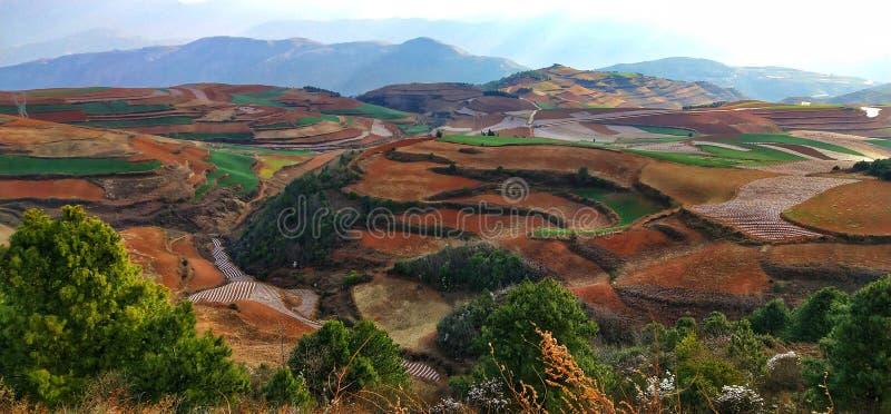 Terrasses colorées de riz II dans la province de Yunnan, Chine image stock