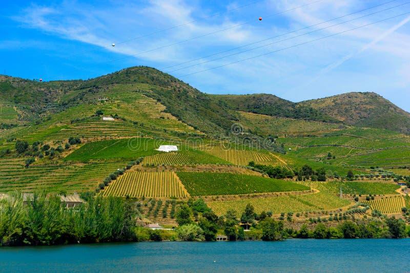 Terrasses de Douro des vignobles, Dona Matilde Oporto Wine photo libre de droits