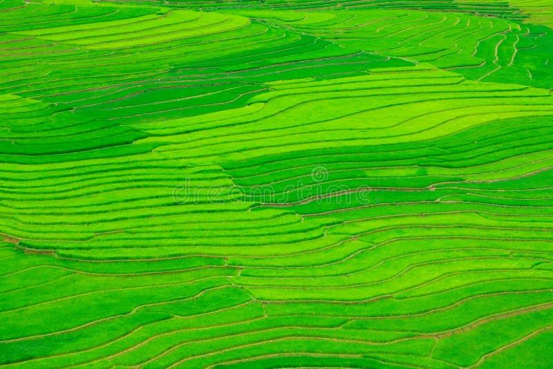Terrasses de gisement de riz images stock