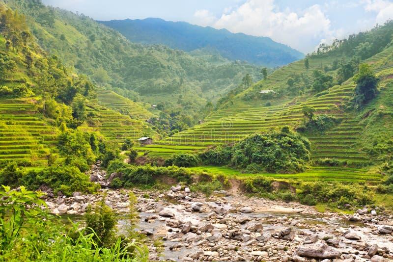 Terrasses de gisement de riz photographie stock