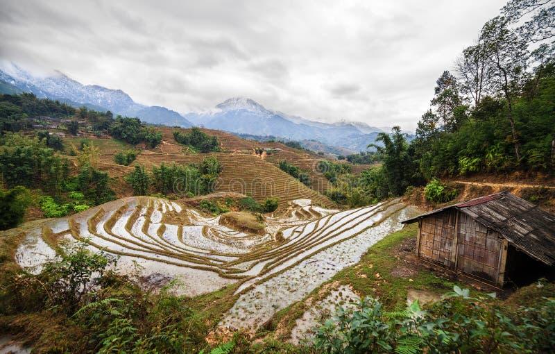 Terrasses de gisement de riz Sapa Vietnam photo libre de droits