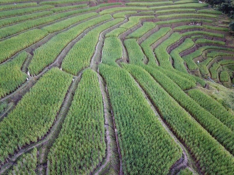 Terrasses de gisement de riz images libres de droits