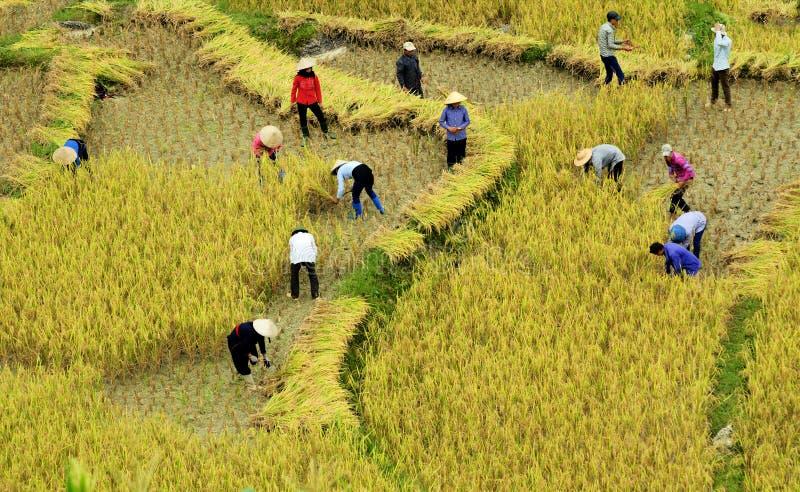 Terrasses de riz photographie stock