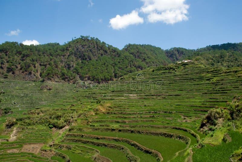 Terrasses de riz image stock