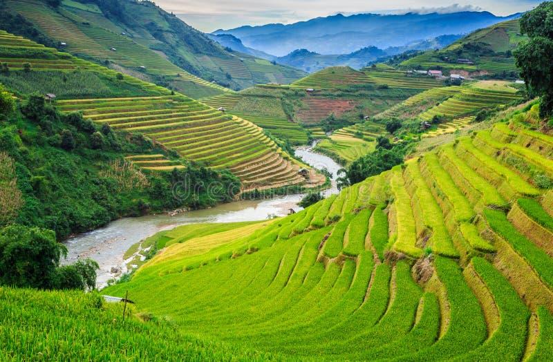 Terrasses de riz images stock