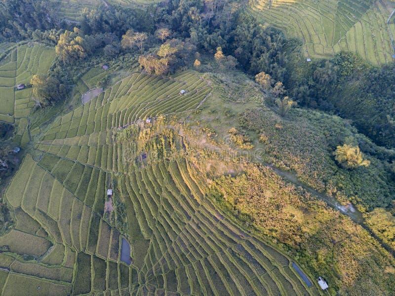 Terrasses de riz aériennes photos stock
