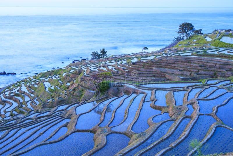 Terrasses de riz au crépuscule images stock