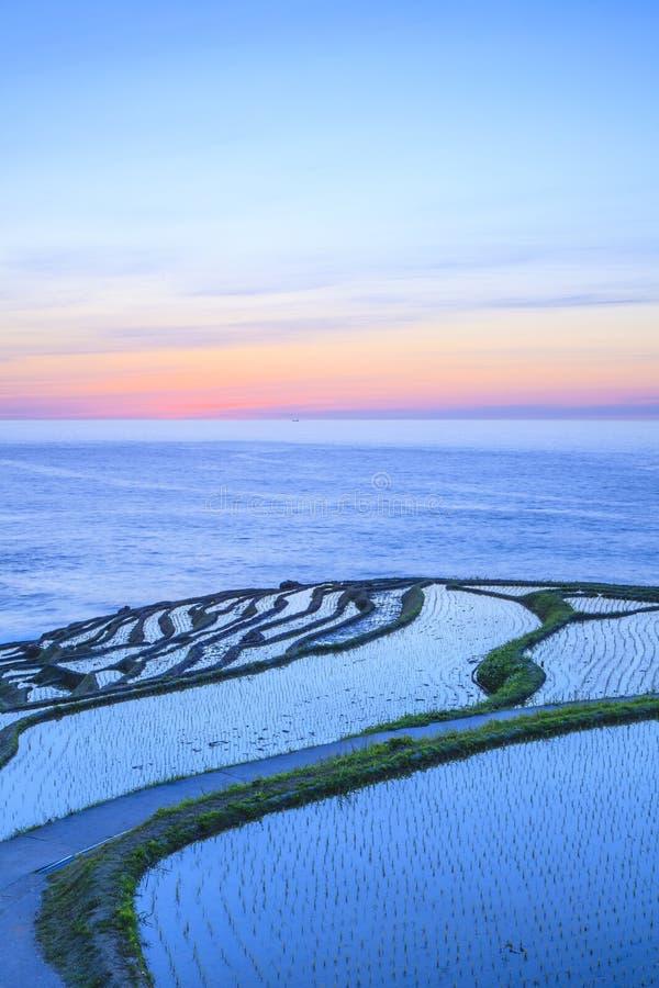 Terrasses de riz au crépuscule images libres de droits