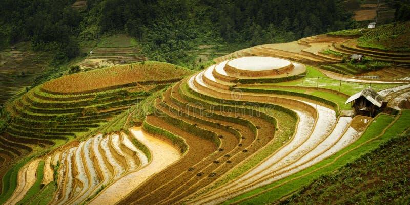 Terrasses de riz au Vietnam du nord-ouest photographie stock