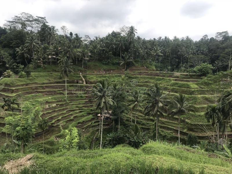 Terrasses de riz de Bali de vue de touristes photos libres de droits