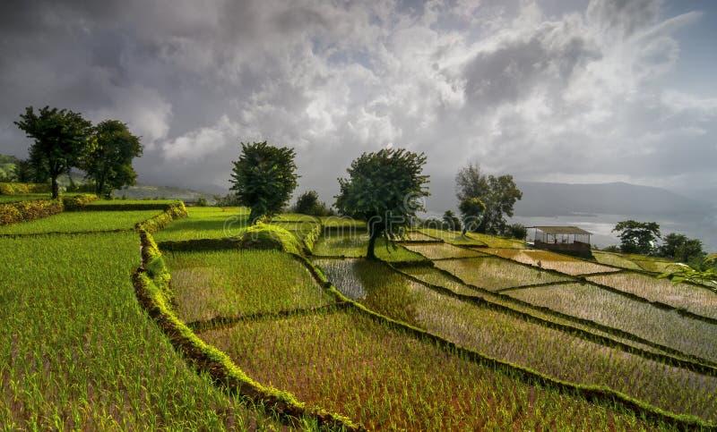 Terrasses de riz chez Koyna Nagar Satara, maharashtra, Inde images libres de droits