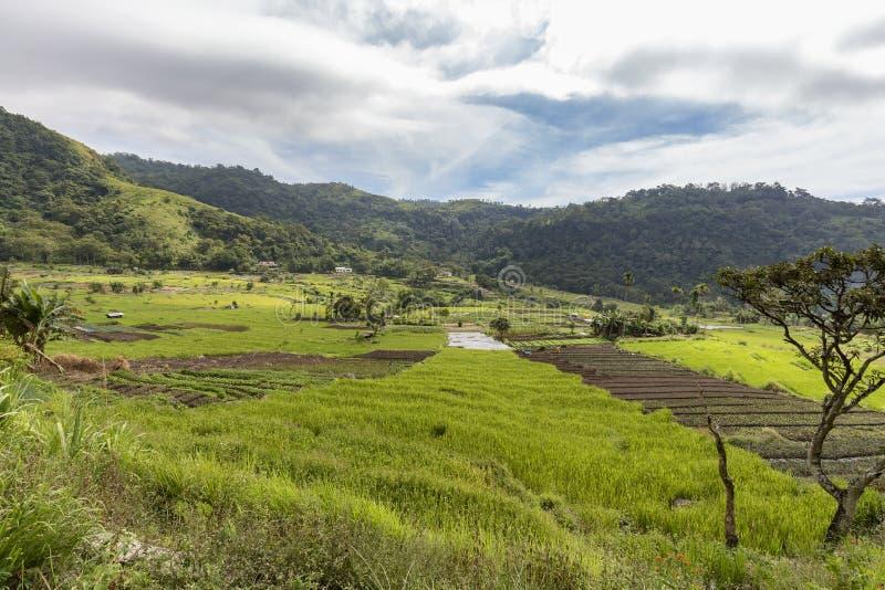 Terrasses de riz dans Flores photo libre de droits