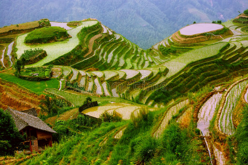 Terrasses de riz dans le support de Yunnan, Chine photographie stock