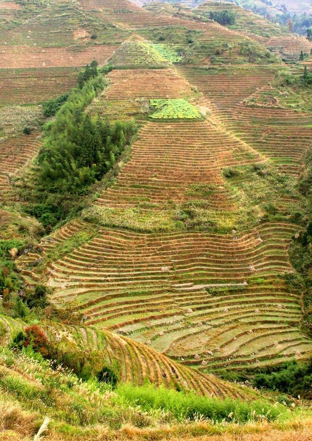Terrasses de riz dans le village Dahai dans Longsheng, Guilin, Chine image libre de droits