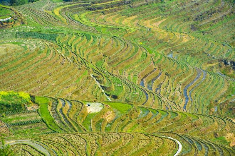 Terrasses de riz dans Longsheng, Chine image stock