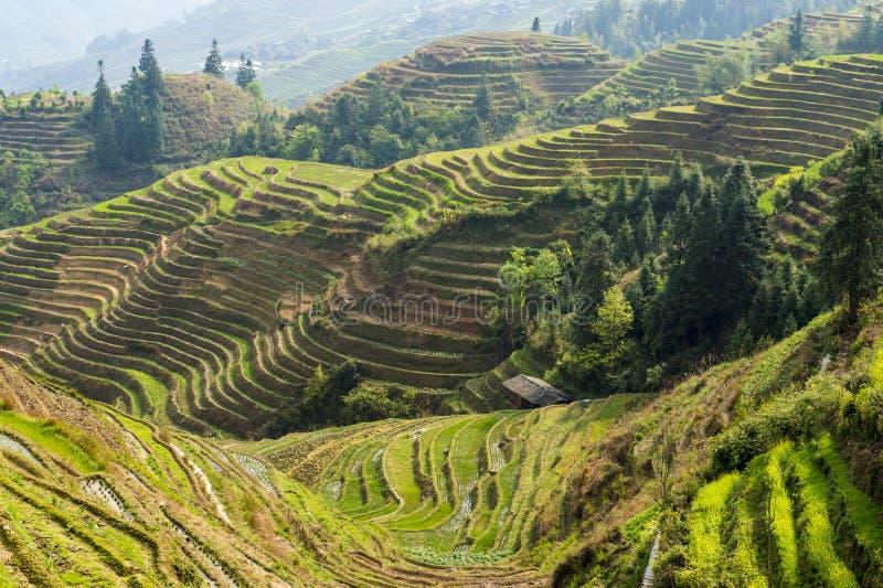 Terrasses de riz dans Longsheng, Chine images libres de droits