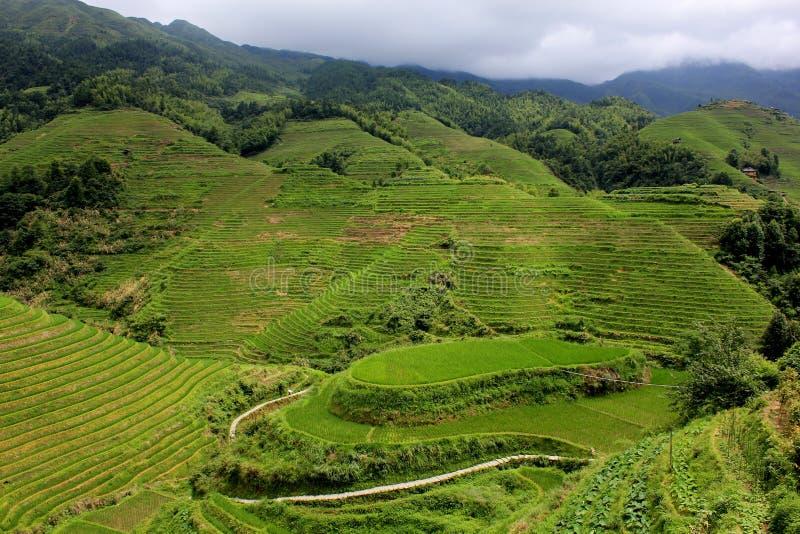 Terrasses de riz de l'épine dorsale du dragon dans le comté de Longsheng, Chine photographie stock libre de droits