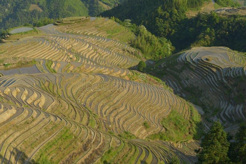 Terrasses de riz de Longji, province de Guangxi, Chine image libre de droits