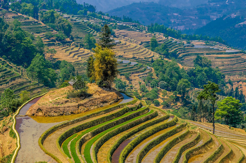 Terrasses de riz de Yuanyang, Yunnan, Chine photographie stock libre de droits