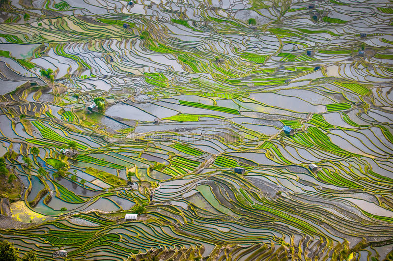 Terrasses de riz de Yuanyang, Yunnan, Chine photo stock