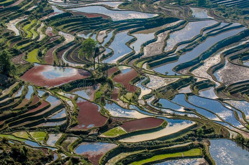 Terrasses de riz de Yuanyang, Yunnan, Chine image stock