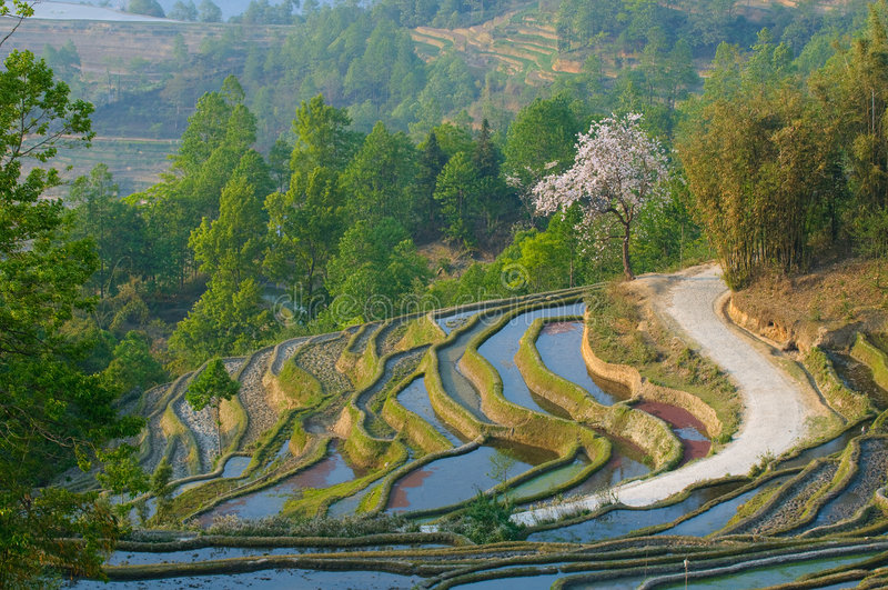 Terrasses de riz de yuanyang, yunnan, porcelaine photographie stock libre de droits