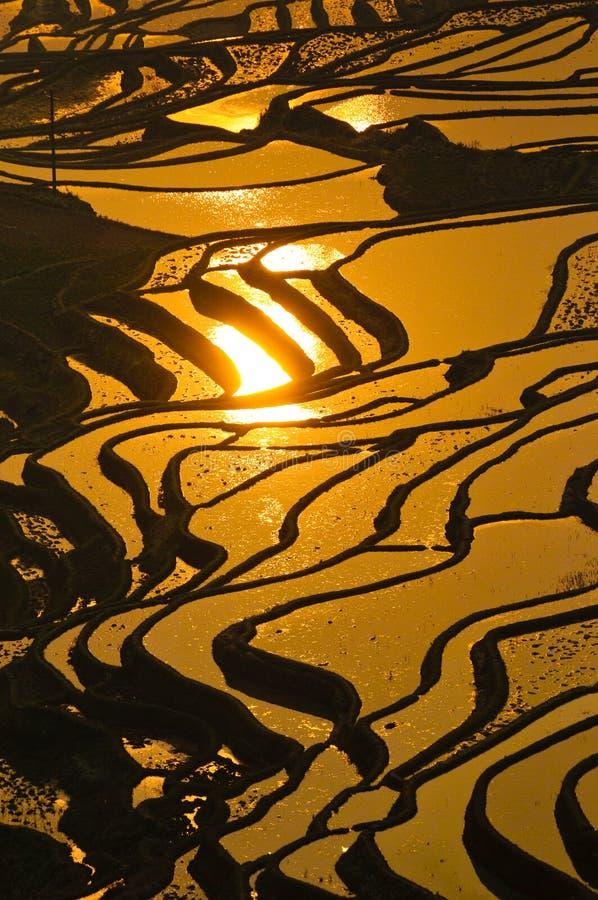 Terrasses de riz de yuanyang, yunnan, porcelaine images stock