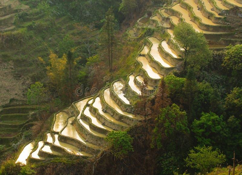 Terrasses de riz de yuanyang, yunnan, porcelaine image stock