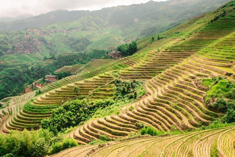 Terrasses de riz de Longji de Longsheng à Guilin, Chine images libres de droits