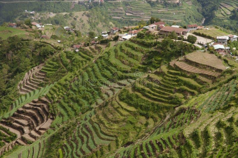 Terrasses de riz - Philippines photos libres de droits