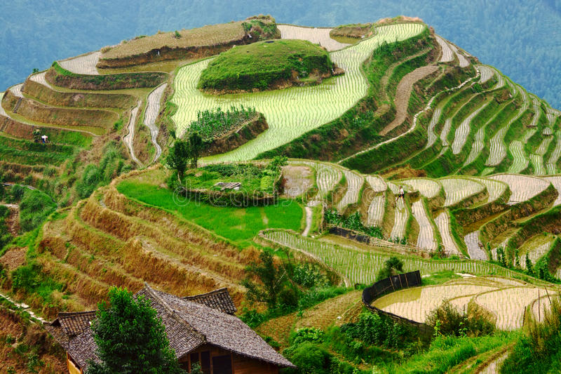 Terrasses de riz sur l'arête de dragon, égalisant la lumière images stock
