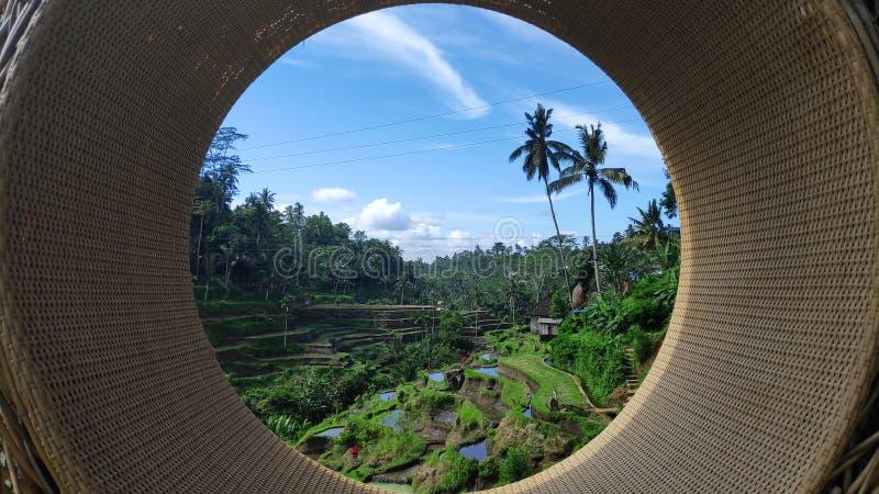 Terrasses de riz de Tegalalang dans Ubud, Bali photo libre de droits