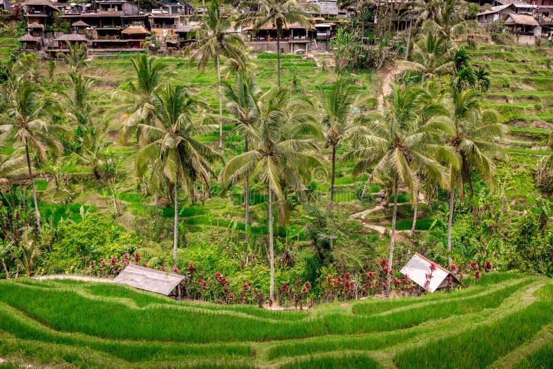 Terrasses de riz de Tegallalang dans Ubud, Bali, Indon?sie images stock