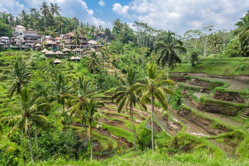 Terrasses de riz de village de Tegallalang dans Bali, Ubud image libre de droits