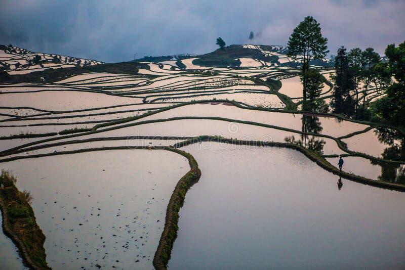 Terrasses de riz de Yuanyang en Chine photographie stock libre de droits