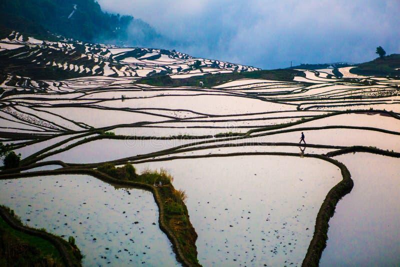 Terrasses de riz de Yuanyang en Chine image libre de droits