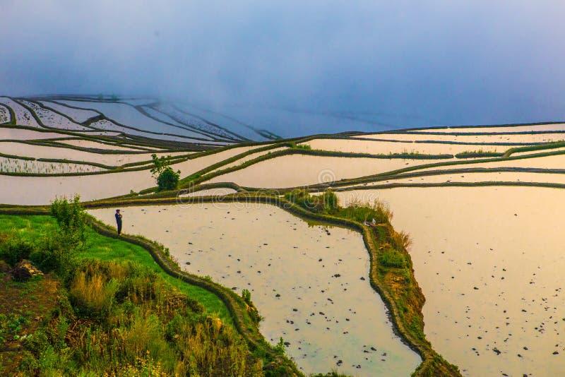 Terrasses de riz de Yuanyang en Chine photo libre de droits