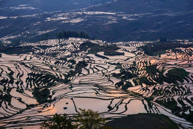 Terrasses de riz de Yuanyang pendant le lever de soleil avec de grandes réflexions oranges colorées images stock