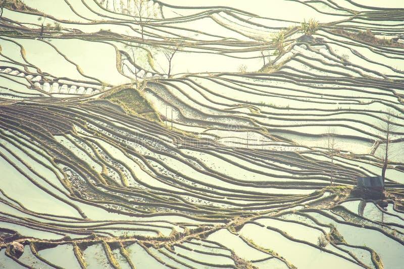 Terrasses de riz de yuanyang, porcelaine image libre de droits
