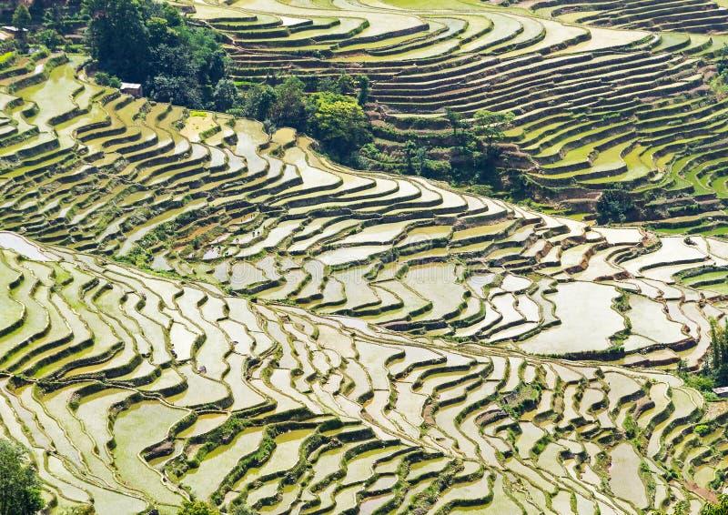 Terrasses de riz de Yuanyang, Yunnan - Chine images stock
