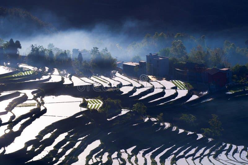 Terrasses et brouillard de riz images stock