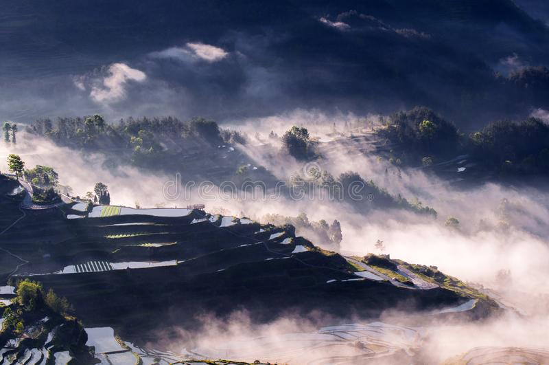 Terrasses et brouillard de riz photographie stock libre de droits